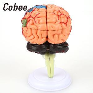 Image 4 - 学校教育モデル医療教育のモデル脳解剖モデル 4D取り外し可能な視覚科学耐久性のあるpvc教育ツール