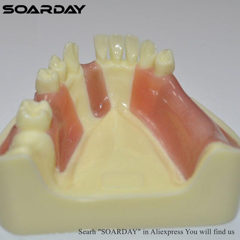 teeth size anatomy (HH)