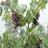 Сетка Tewango 2,5 см, прозрачная нейлоновая сетка для защиты сада от птиц, для балкона, для защиты фруктовых деревьев, для пруда и растений
