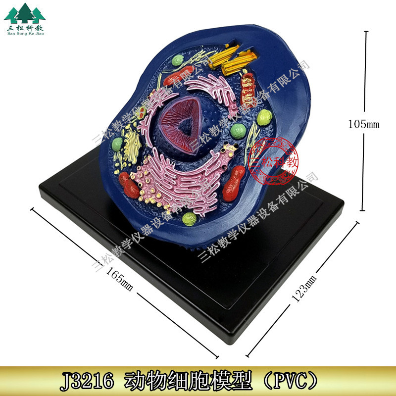 Animal Cell Model Microstructure Anatomical Model Middle School Biology Teaching Biological Cell EquipmentAnimal Cell Model Microstructure Anatomical Model Middle School Biology Teaching Biological Cell Equipment