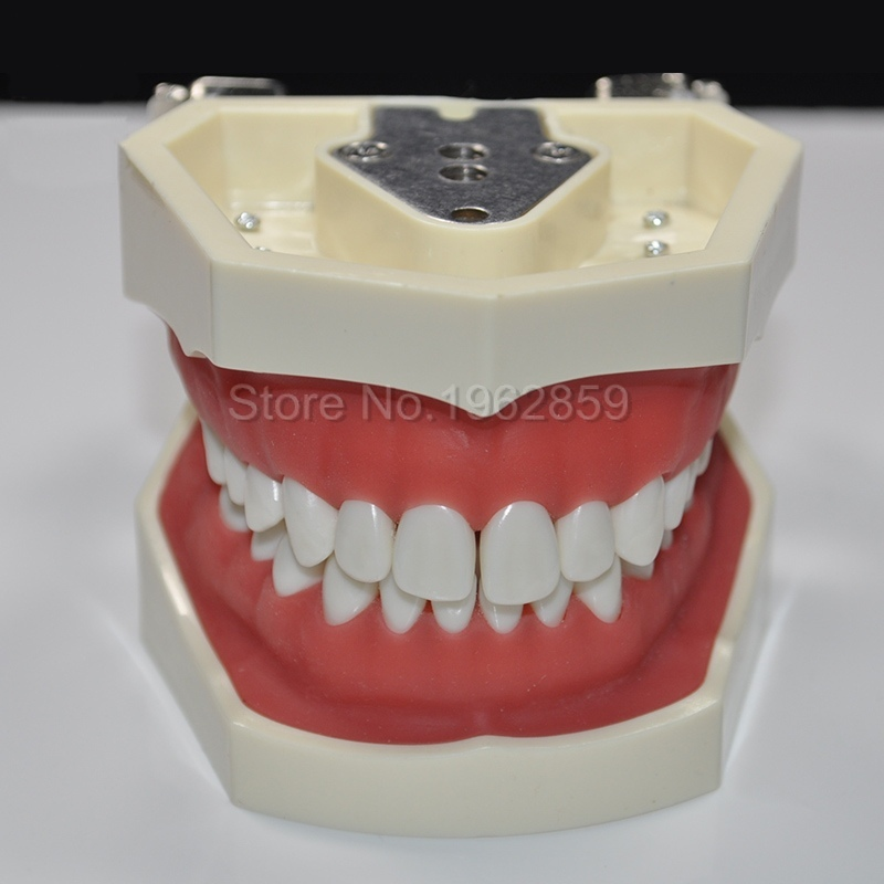 Dental Standard Model Teeth Model Dental Treatment Model Dental Orthodontic Model Removable Dentist Demo dental manikin dental typodont model dental orthodontic model for training practice with wax teeth model and occluder