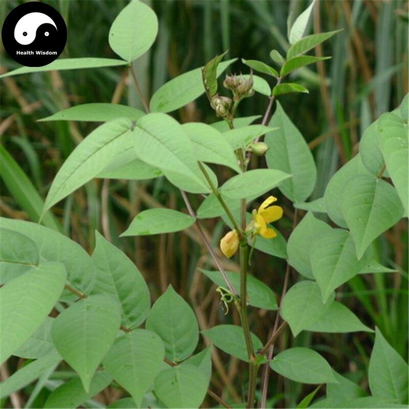 buy-cassia-occidentalis-semente-100pcs-plant-herba-coffee-font-b-senna-b-font-for-wang-jiang-nan