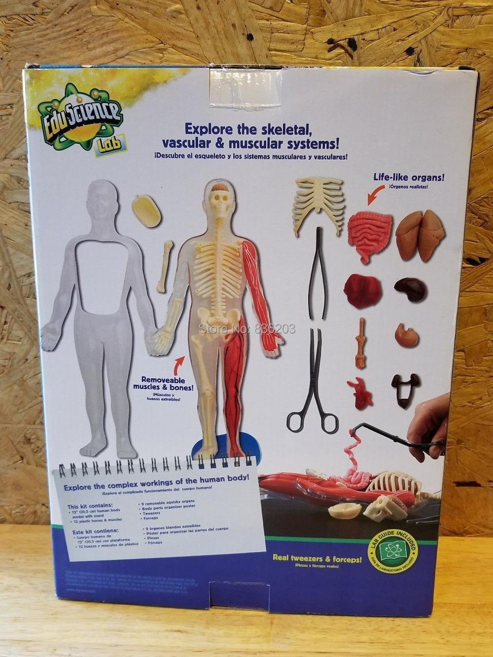 SmartLab Toys Squishy Human Body funny ANATOMY MODEL medical ...