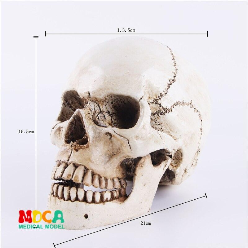 Human.skull Model Medical Simulation Teaching Equipment Resin Skull Ornament Gift YTTG002