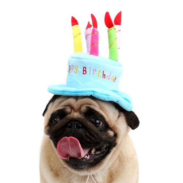 Bello Dell Animale Domestico Del Gatto Del Cane Di Compleanno