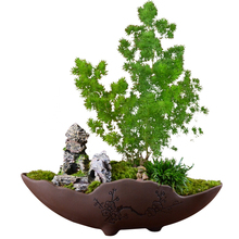 Chinese style purple sand pot green planting personality creative combination small flower handmade classical basin