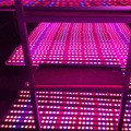 High quality Waterproof 54W led grow light bar red blue indoor plant strip lamp lighting for hydroponics greenhouse grow box