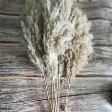 20 Pcs Dried small pampas grass decor natural phragmites communis real ptotos wedding flower bunch
