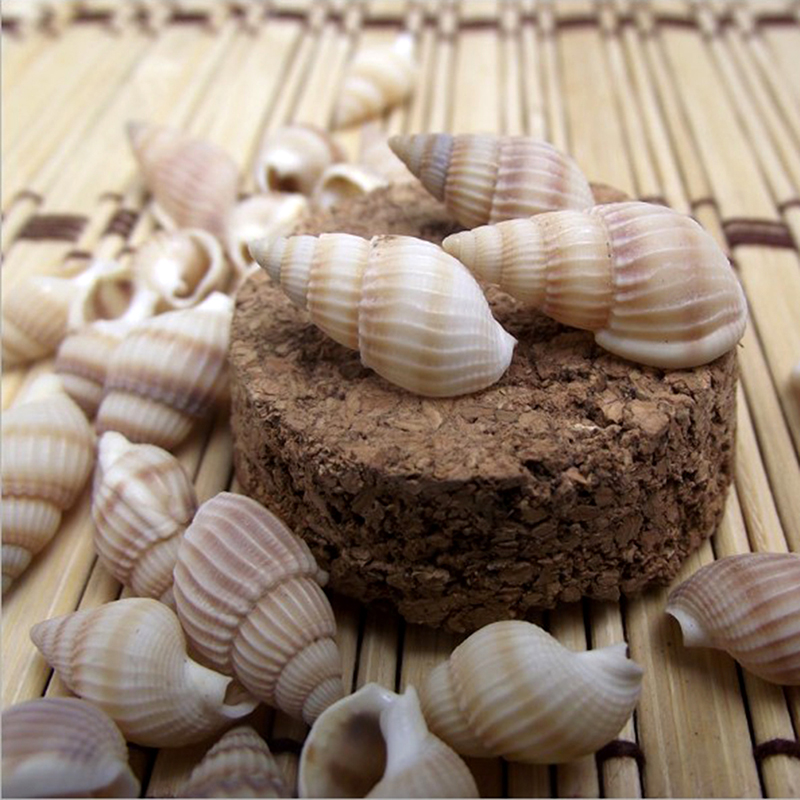 100PCS Natural Conch Shells Aquarium Decoration Party Festival Home DIY Decor Natural Sea Beach Shell Conch Seashells Home Decor