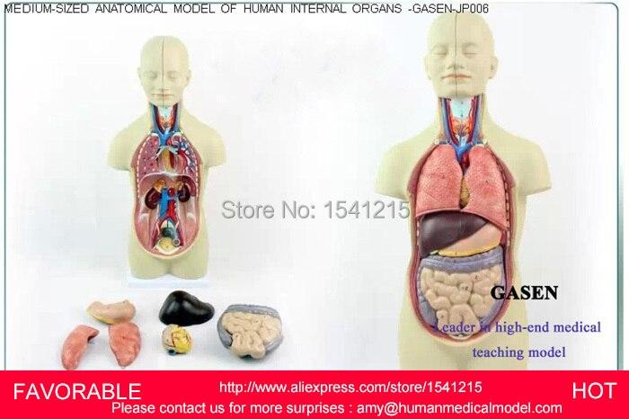 анатомически точный манекен - ORGANS TORSO ANATOMY MODEL MEDICAL DUMMY MEDICAL MANNEQUIN HUMAN MUSCLE ANATOMY  ANDROGYNY ORGANS ANATOMICAL MODELGASEN-JP006