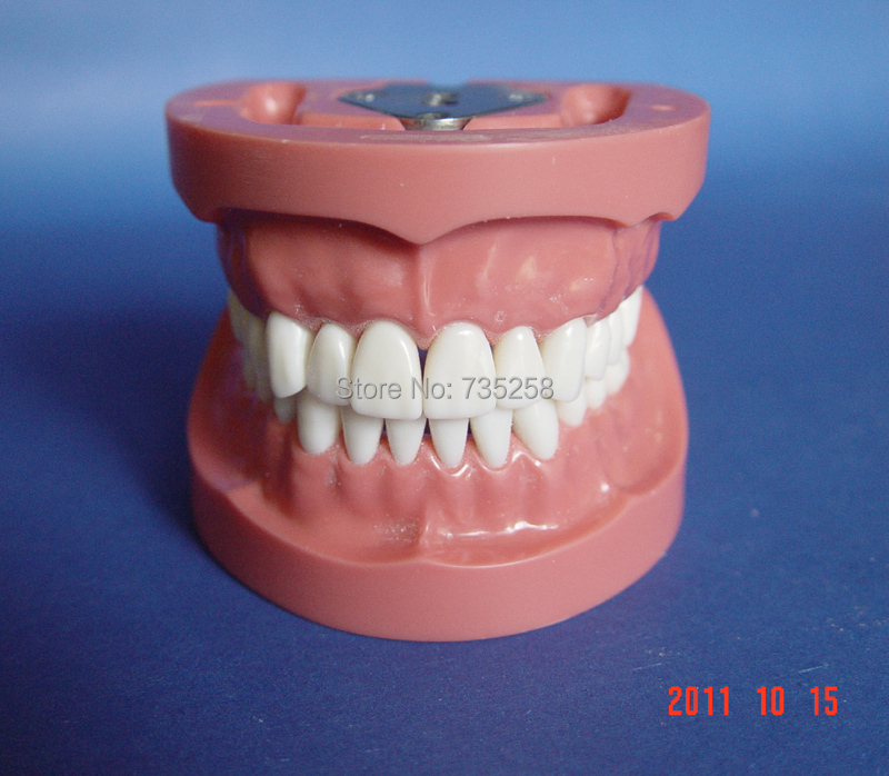 Preparation of Dental Practice Model,Tooth Model,32 Teeth Model teeth orthodontic model ceramic braces wrong jaw demonstration model orthodontics practice model