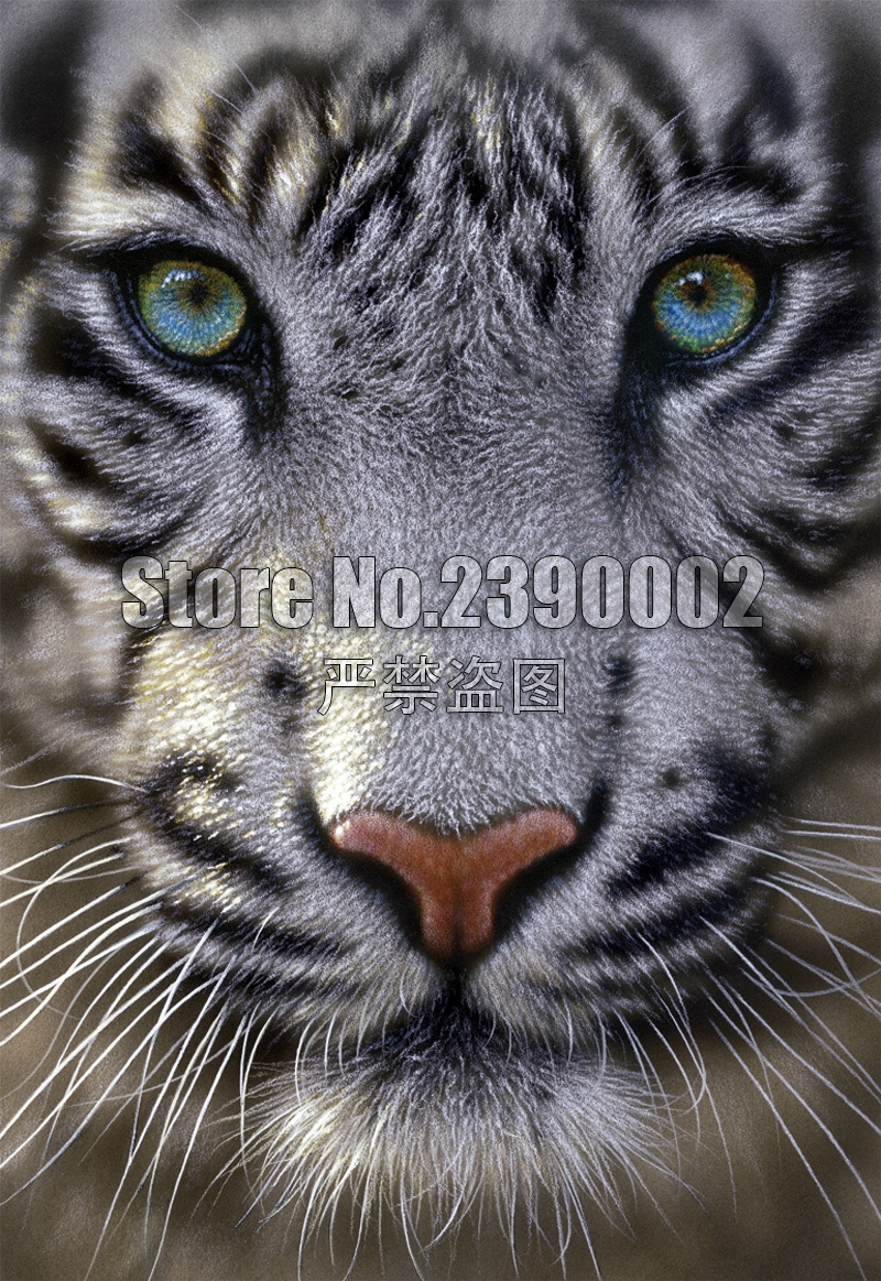 5D Diy Diamond Painting Full Square Diamond Mosaic Drill Icons 3D Diamond Embroidery White Tiger animals Art Home Decor Gifts(China)