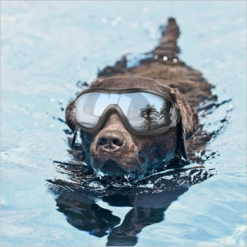 Pet Dogs Eyeglasses UV Sunglasses Swimming Ski Goggles Waterproof Windproof Blinkers Puppies Fashion Sunglasses High Quality