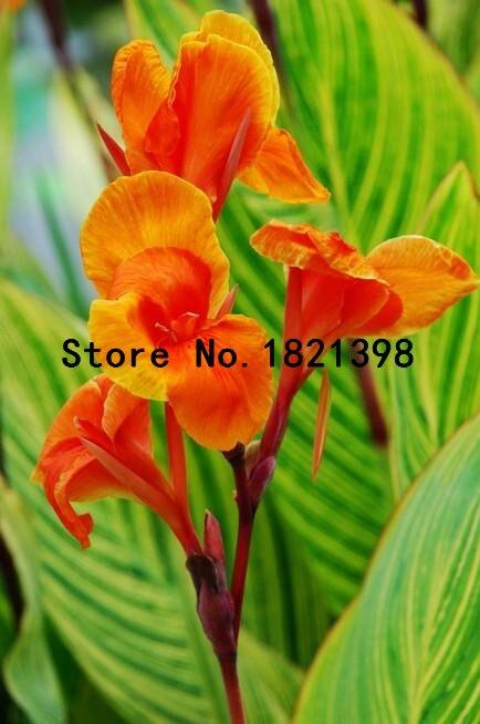 piece giardino-acquista a poco prezzo piece giardino lotti da