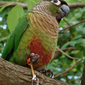 2016 Новое Прибытие Попугай Жгут Пластик Масштабируемые Птица Поводок Красный Зеленый Цвет Обучение Веревка кольца для голубей Бесплатно