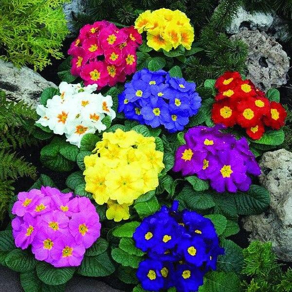 Popular English Garden Plants Buy Cheap English Garden Plants lots
