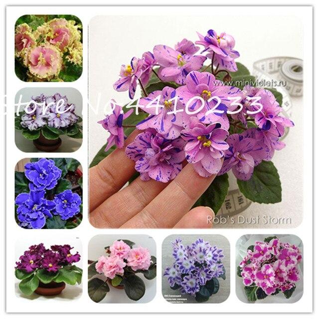 100 piezas Mini bonsái violeta flor Africana rara para el jardín para ver Stock perfumado de noche hierba violeta perenne interior las plantas