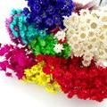 120pieces 0.8-1cm mixed color cute daisy dried flower fit glass vials glass bottle glass vial glass bubble