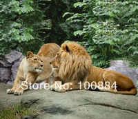 Ropa de cama de León 3d, juegos de cama de 4 piezas sin relleno, colchas de León doradas, león animal 3d ropa de cama reina tamaño