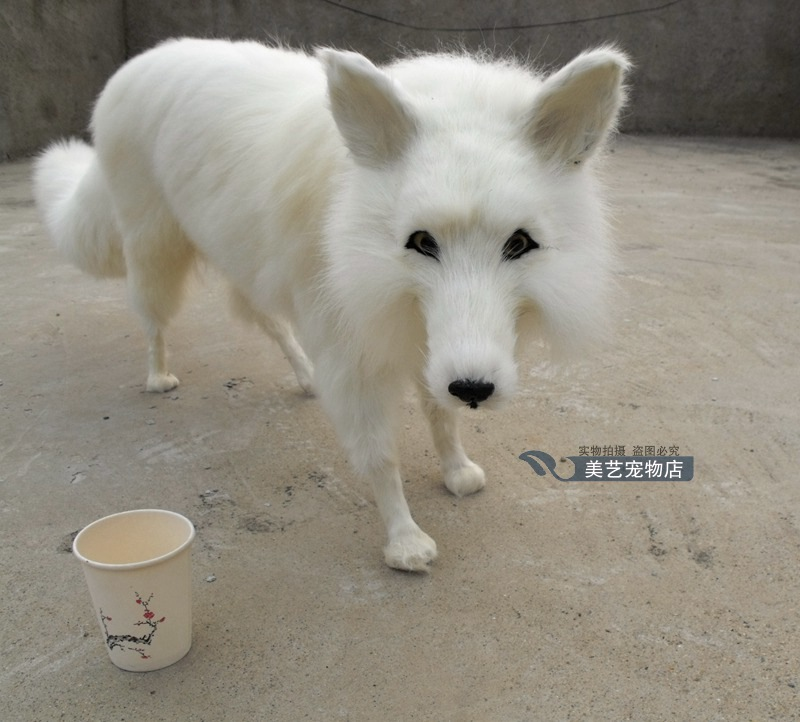 simulation cute white fox  63x18x40cm toy model polyethylene&furs fox model home decoration props ,model gift d171 simulation animal large 28x26cm brown fox model lifelike squatting fox decoration gift t479