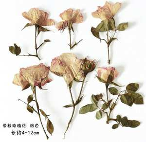 10pcs/lot Retro colour dried flower Glue dried flowers rose for mobile phone shell Pressed flower craft specimen materials