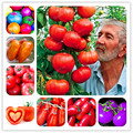 24kinds Nutritious Tomato bonsai Rare Huge tomato plant Bonsai Organic Vegetable fruit Potted plant for Home Gardens 50PCS