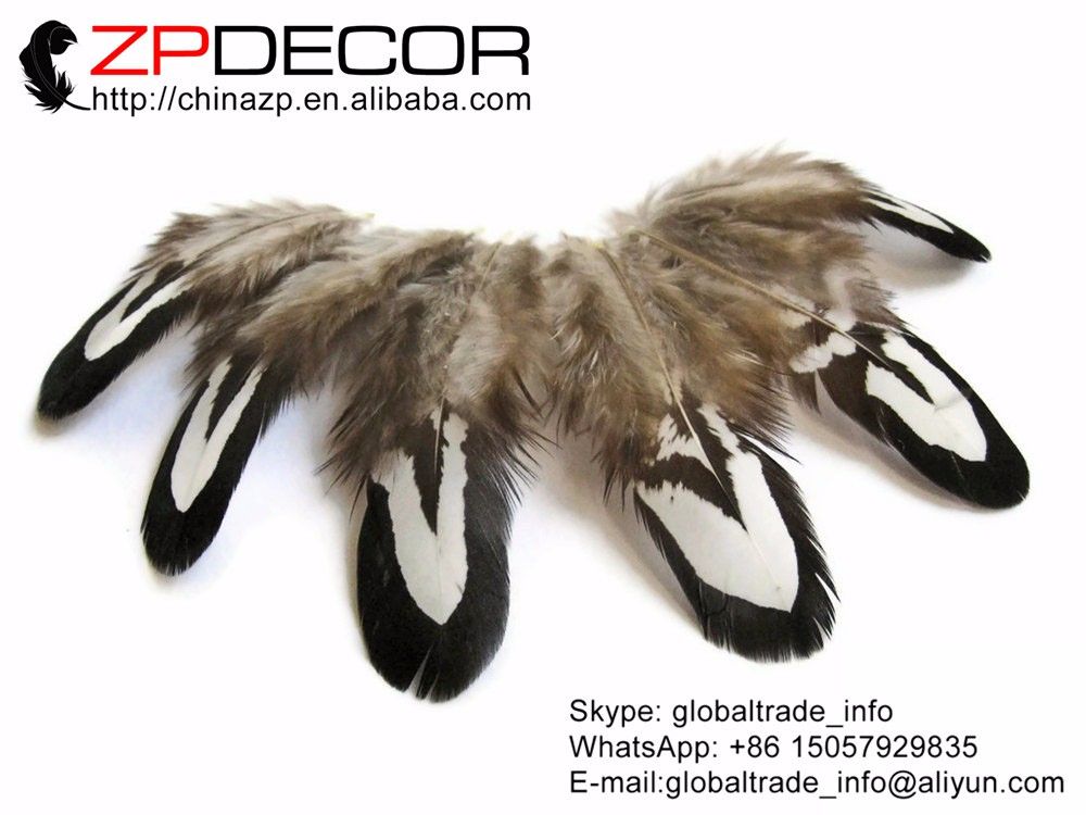 Tiny Black and White Reeves Venery Pheasant Plumage feathers2