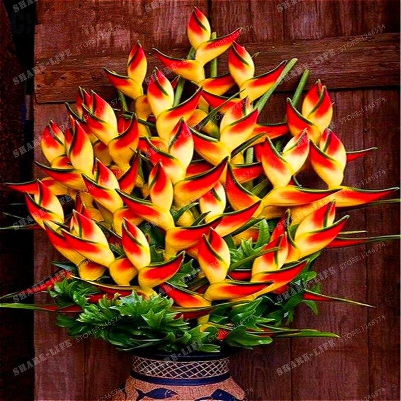 achetez en gros oiseau de paradis fleur en ligne des grossistes oiseau de paradis fleur. Black Bedroom Furniture Sets. Home Design Ideas