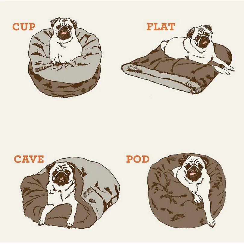 Dog-bag-infographic