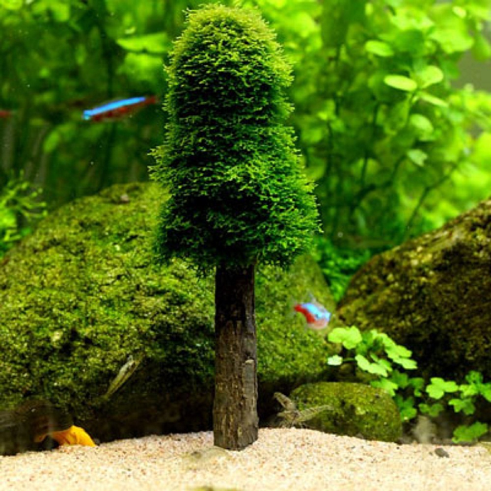 Fish tank in spanish - Aliexpress Com Buy Aquarium Artificial Xmas Moss Christmas Tree Fish Tank Simulation Plant Grow Cultivation Landscape Ornament Decoration Bonsai From