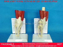 HUMAN LIFE SIZE HUMAN KNEE JOINT MODEL SKULL ANATOMY SKULL MEDICAL HEAD MUSCLE BONE MEDICAL SMILE SCIENCE-GASEN-RZJP030
