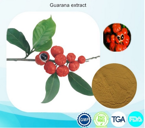 1KG High quality best price Guarana Extract Powder 10% caffeine Free shipping best quality 1kg emodin 98%hplc free shipping hot sales natural emodin extract powder