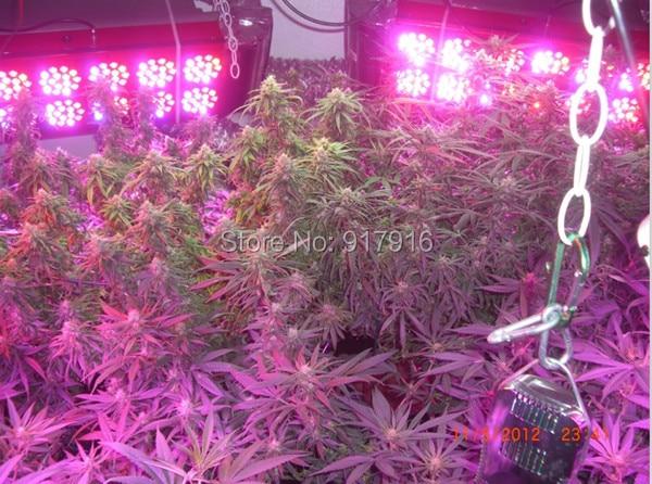 Apollo 10 LED Grow Lights Full Spectrum 6band 450W Indoor Medical Plants Greenhouse - Smyled Lighting Co., Ltd. store