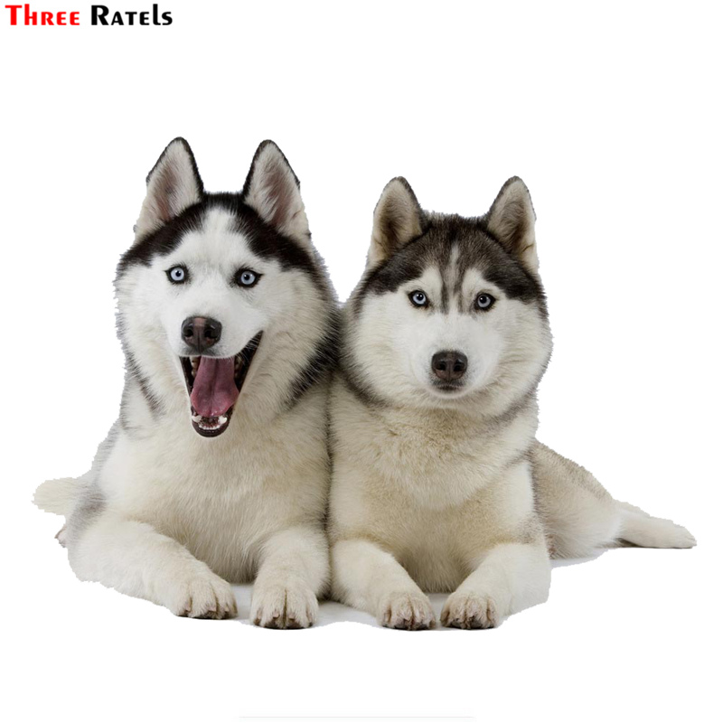 Three Ratels TRL532# 14x10.5cm Two Huskies Dogs Funny Car Stickers  Car Sticker Funny Car Stickers And Decals