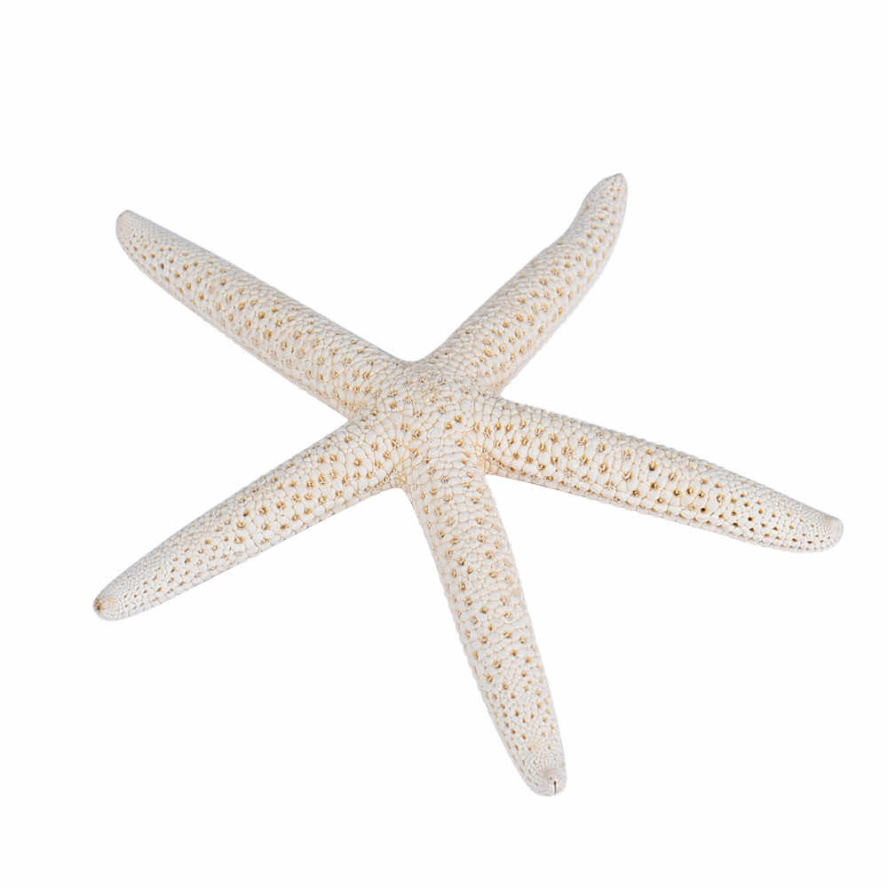 Hot 10 Piece 6-10cm White Natural Finger Starfish Craft Decoration Natural Sea Star DIY Cottage Wedding Decor Drop shipping #F
