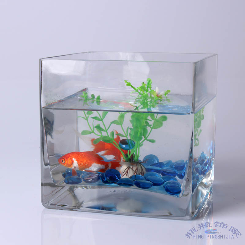 Small glass fish tanks for Square fish tank