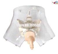 Transparent Male Urethral Catheterization Simulator