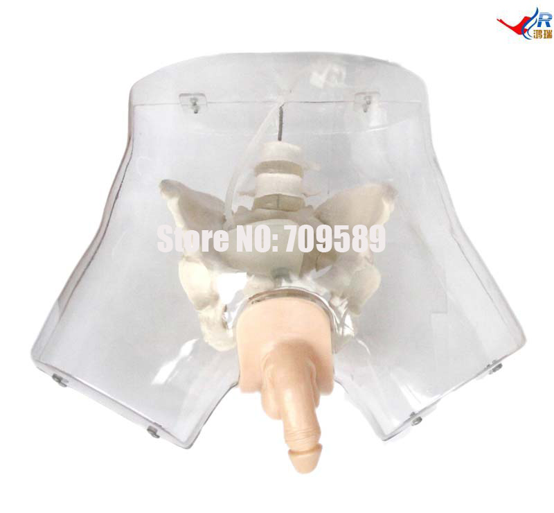 Transparent Male Urethral Catheterization Simulator цена