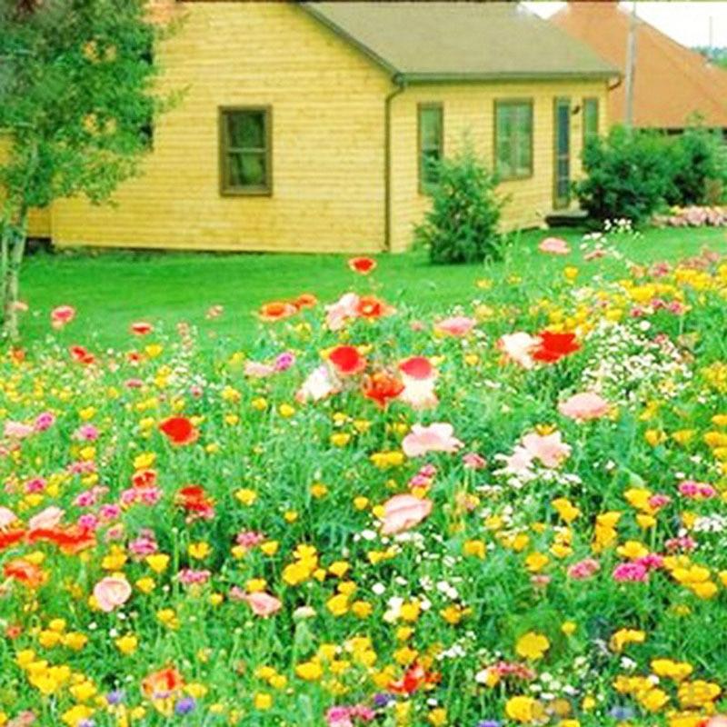 ᗑVenta caliente 300 unidades crisantemo mezcla perenne flor siembra ...