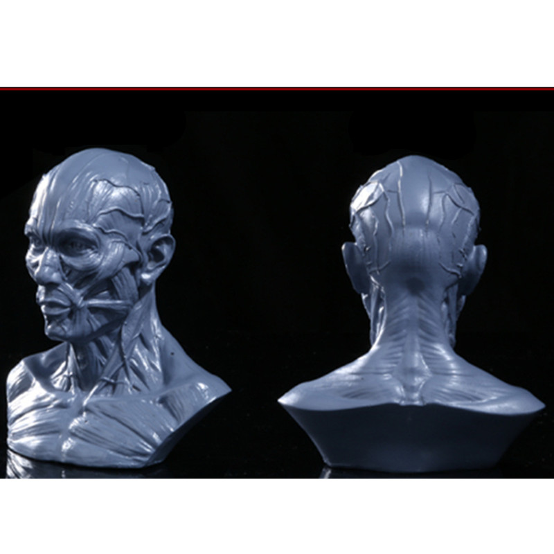 European Style Simulation Human Body Half-Length Photo Or Portrait Medical Artware Skull Line Drawing Teaching Aids L977