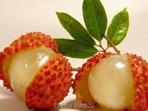 100 Pcs Insect Catching Plant Enchantress Carnivorous Desk Pot Bonsai Seeds Bonsai Design Bonsai Plant Seedsbonsai Flower Aliexpress