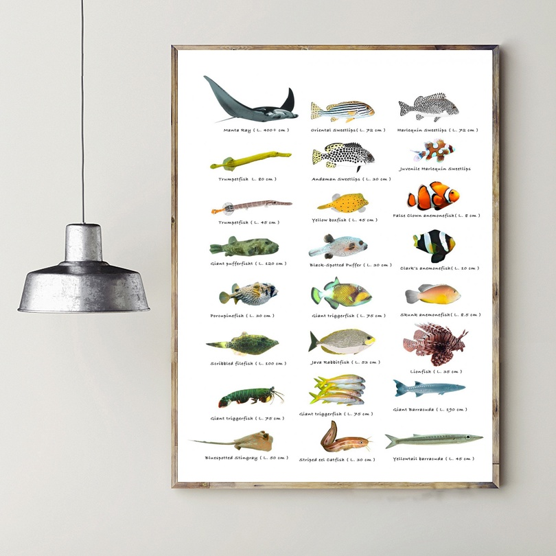 Types of little fish chart canvas painting wall art - What type of paint for living room walls ...