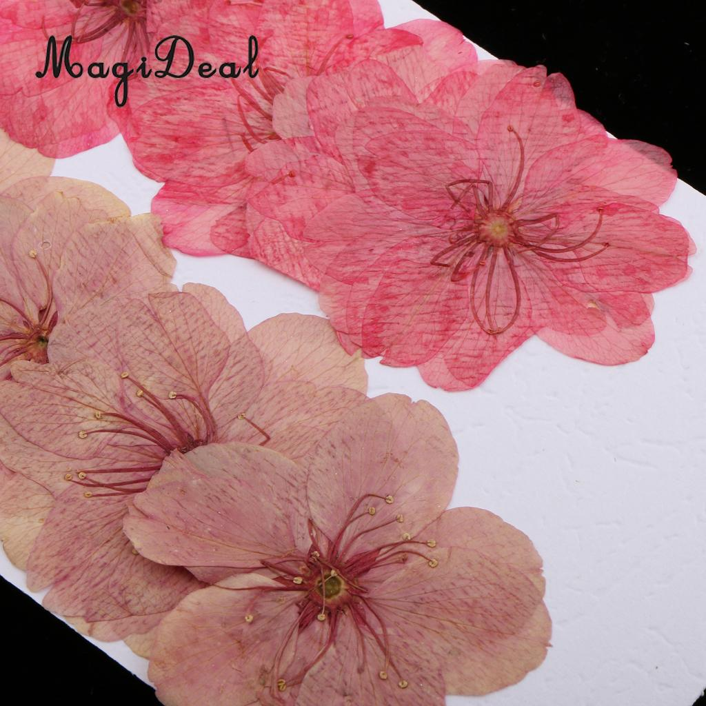 10pcs Natural Pressed Dried Sakura Flower Cherry Blossom for DIY ...
