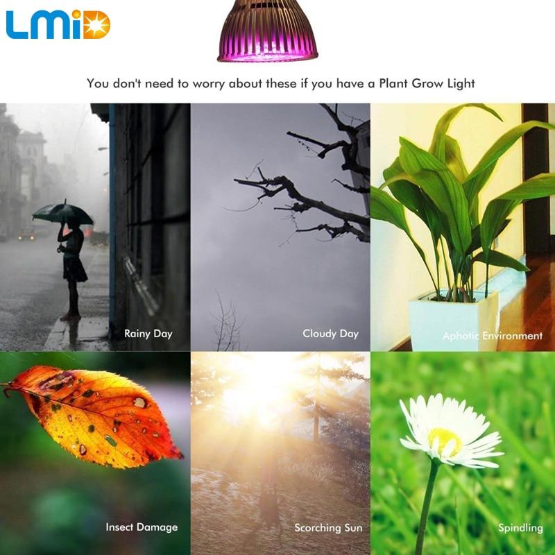 Lmid Ամբողջական սպեկտրով բույսերի աճող - Մասնագիտական լուսավորություն - Լուսանկար 5