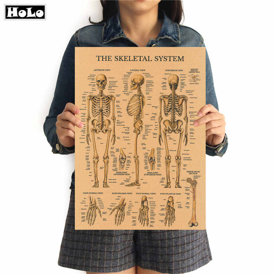 The Skeleton of The Body Structure HD Vintage Paper Poster Bar Home Decor Retro Kraft Paper Painting 42x20cm Wall Sticker