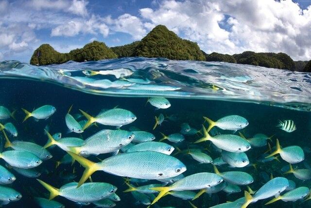 Palau Diving Center Malakal Island Nature Landscape Underwater Fish KB558 Living Room Home Modern Art Decor