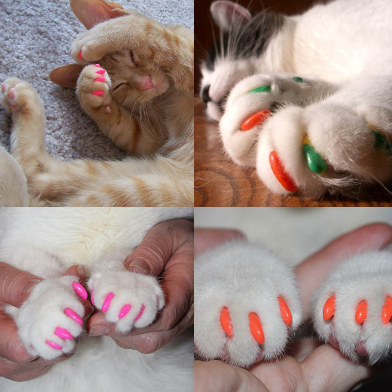 20 Pcs New Blister Card Anti-scratch Silicone Soft Cat Nail Caps Cat Paw Claw Nail Protector With Applicator And Free Glue #5