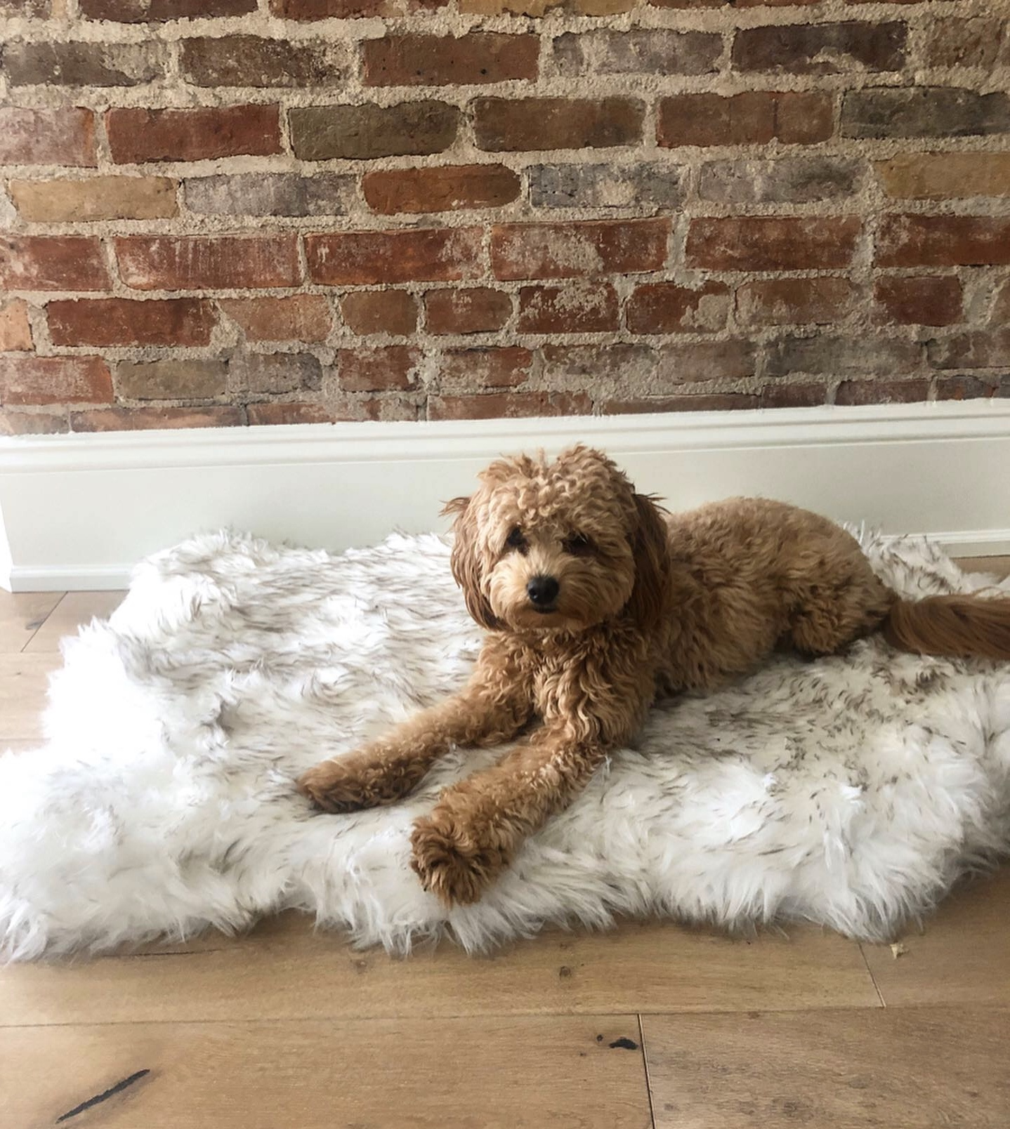 Faux Fur Dog Mat Curve White Winter Soft Warm Cozy Pet Cushion for Medium Large Dogs & Cats - Durable & Luxurious Throws Blanket(China)