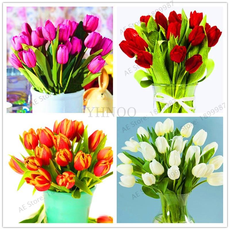 107 PCS ,High-grade Flower Flores Garden Tulip Plante Bonsai Plantas Balcony Pot Most Beautiful And Colorful Plants Bonsai
