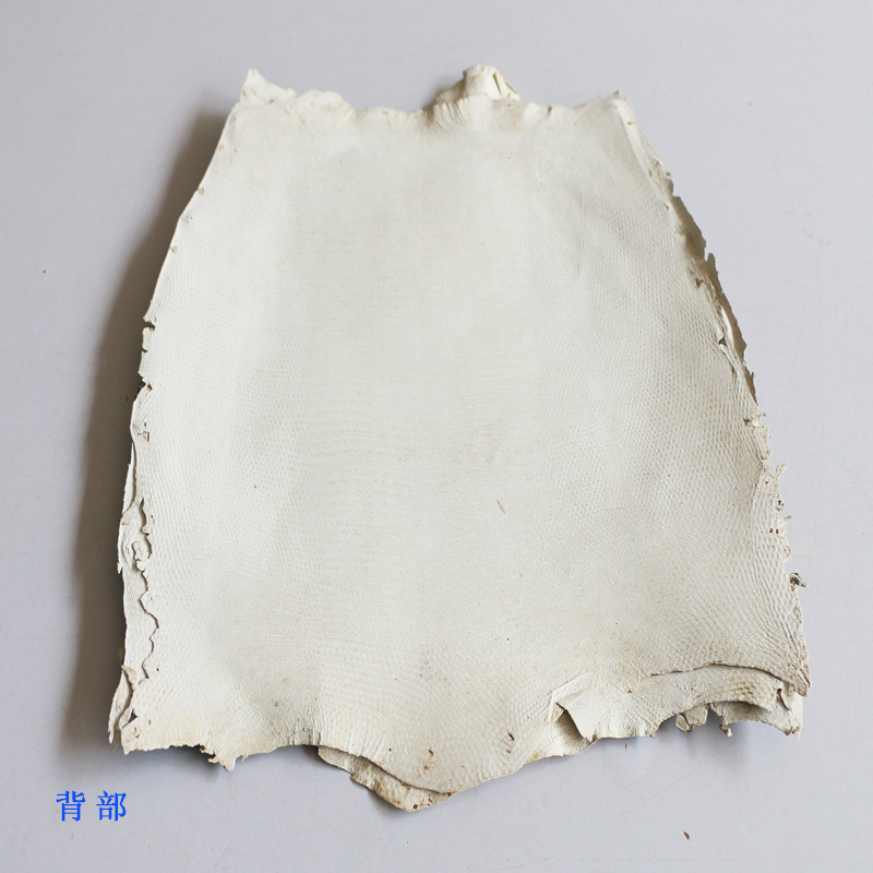 Piel de lagartija Artesanal de cuero genuino con color original - 3